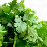Vitami E in coriander leaves