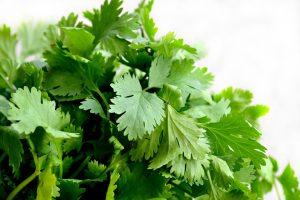 Vitami E in coriander leaves