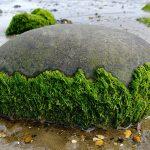 Vitamin E in seaweed